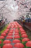 Les décorations de parapluie chez Yeojwacheon coulent pendant le festival de Jinhae Gunhangje, Jinhae, Corée Photos stock