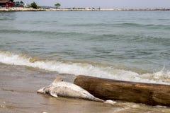 Les dauphins de problème écologique meurent photographie stock