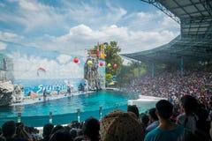 Les dauphins montrent l'étape en Safari World, Thaïlande images stock