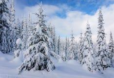 Les décorations de Noël sur la neige ont couvert des pins dans la forêt Image libre de droits