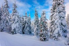 Les décorations de Noël sur la neige ont couvert des pins dans la forêt conifére Images libres de droits