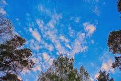 Les dessus des arbres avec le ciel bleu et les nuages Photos stock