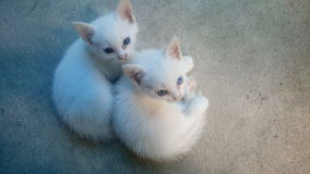 Les deux petits chats métis Images libres de droits