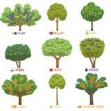 Les différentes sortes d'arbres fruitiers avec des noms placent, des arbres de jardin et les buissons de baie dirigent des illust illustration de vecteur