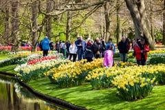 Les différentes tulipes de couleur sur la berge dans Keukenhof se garent dans la région d'Amsterdam, Pays-Bas Fleur de ressort da Photos libres de droits