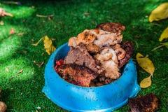 Les différents genres de viande grillée rapièce dans le bol d'aliments pour chiens Photos stock