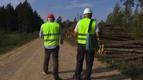 Les dirigeants de forêt près de la pile de ouvre une session la forêt banque de vidéos