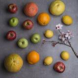 Les divers fruits avec l'amande fleurit, fond gris photographie stock libre de droits