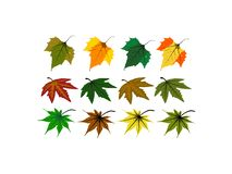 Les divers genres de feuilles illustration libre de droits