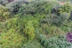 Les divers types des arbustes et de buissons clôturent la vue avec des feuilles de verdure après la pluie abattue dans la saison  image stock
