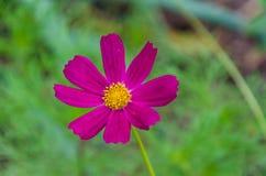 Les diverses différentes fleurs avec des couleurs vives en été lumineux s'allument photo libre de droits