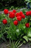 Les diverses tulipes de couleur fleurit dans une de la maison danoise dans Kastrup Images libres de droits