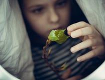 Les doigts de fille touche les jeunes feuilles d'un arbre Photo stock