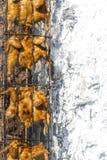 Les douzaines de chiken ont mangé sur le gril de BBQ de Th : Wilson Park, Torrance Photographie stock