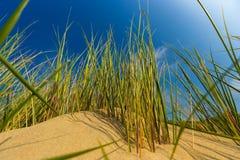 Les dunes à la Mer du Nord belge marchent contre les nuages stratus de cirrus et et l'herbe tubulaire Photos libres de droits