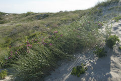 Les dunes de sable du Curonian crachent sur la mer baltique Photographie stock libre de droits