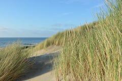 Les dunes engazonnent dans les dunes sur la Mer du Nord Image stock