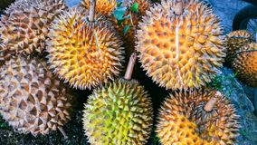 Les durians Photographie stock