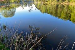 Les eaux d'un lac calme pendant le début de la matinée dans la forêt images libres de droits