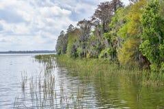 Les eaux de marais image libre de droits