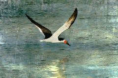 Les eaux de zone humide Image libre de droits