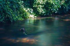 Les eaux foncées de la rivière de Stour Image stock