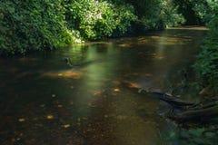 Les eaux foncées de la rivière de Stour Photographie stock libre de droits