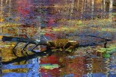 Les eaux se reflétantes d'automne coloré d'ouverture image stock
