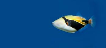 Les eaux tropicales Photo libre de droits