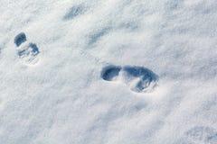 Les empreintes de pas dans la neige Photo stock