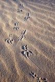Les empreintes de pas de l'oiseau Photographie stock