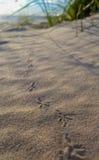 Les empreintes de pas de l'oiseau Photos stock