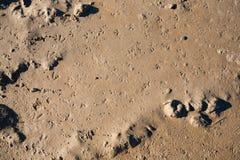 Les empreintes de pas des mouettes Photos stock