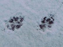 Les empreintes de pas se dégagent dans un saupoudrage de neige image stock
