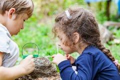 Les enfants alimentent les poussins sauvages dans le nid Photographie stock