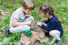 Les enfants alimentent les poussins sauvages dans le nid Image libre de droits