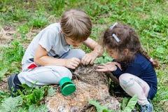 Les enfants alimentent les poussins sauvages dans le nid Photo stock