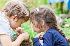 Les enfants alimentent les poussins sauvages dans le nid Photo libre de droits