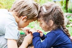 Les enfants alimentent les poussins sauvages dans le nid Photos stock
