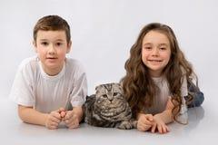 Les enfants avec l'écossais plient le chat d'isolement sur le blanc Amitié d'animal familier d'enfants Images libres de droits