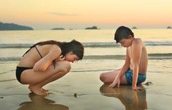 Les enfants de mêmes parents d'adolescent sur le bord de la mer échouent rechercher des morceaux de crabe et de corall de coquill Photographie stock