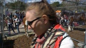 Les enfants et les adultes admirent les chevaux de pur sang pendant les chevaux publics de festival de ville en parc Kaivopuisto banque de vidéos
