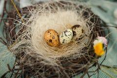 Les enfants font un nid pour des oiseaux, nid pour des oiseaux Photo libre de droits