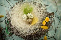 Les enfants font un nid pour des oiseaux, nid pour des oiseaux Photographie stock libre de droits