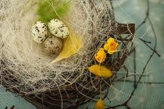 Les enfants font un nid pour des oiseaux, nid pour des oiseaux Images libres de droits