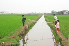 Les enfants jouent dans la rizière dans la campagne du nord du Vietnam Images libres de droits