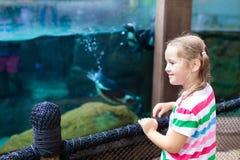 Les enfants observent le pingouin au zoo Enfant au parc de safari images stock