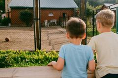 Les enfants regardent les animaux dans le zoo Images stock