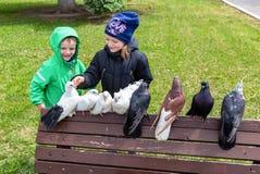 Les enfants regardent les pigeons décoratifs Photo libre de droits