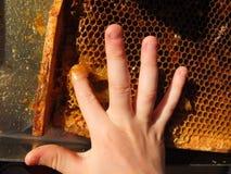 Les enfants remettent et nid d'abeilles complètement de miel doux Photo libre de droits